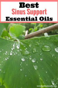 Favorite Essential Oils for Sinus Support and How to Use Them
