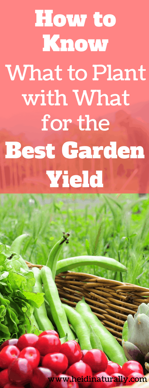 What to plant for the best yield