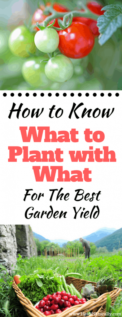 What to plant with what for best garden yield