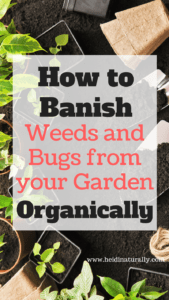 Uncommon tips to keep weeds and bugs away in a successful garden using no chemicals. Learn our best secrets for simple organic weed and pest control.