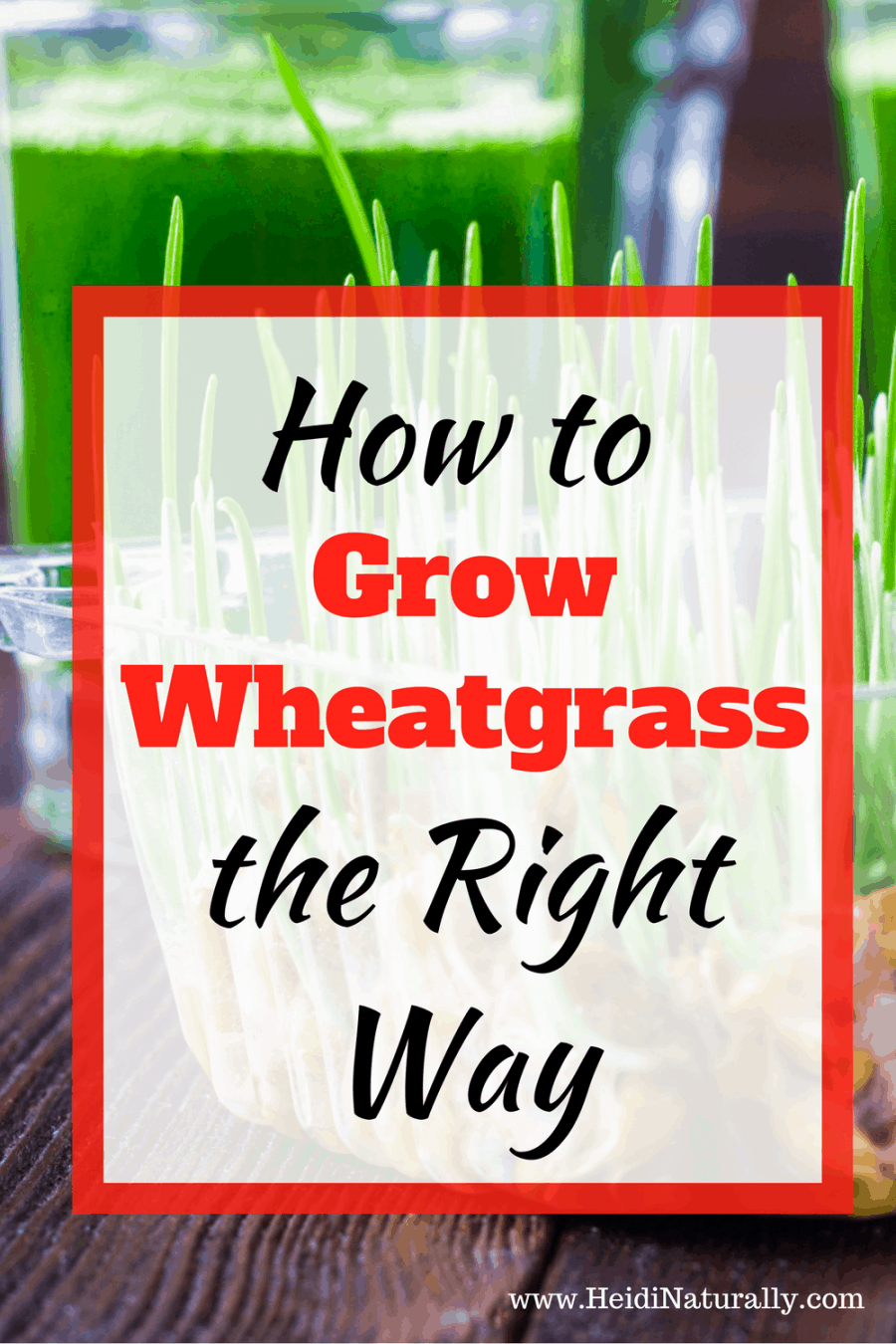 grow wheatgrass | health benefits of wheatgrass