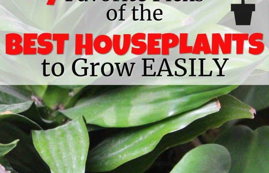 best house plants