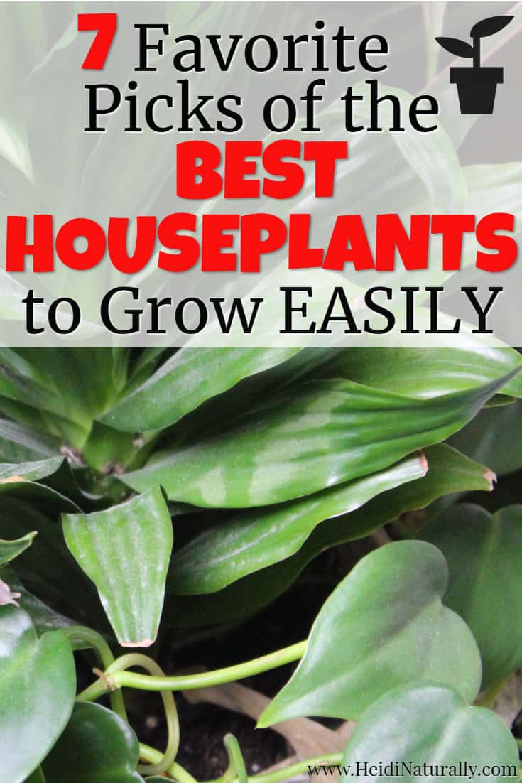 Find out the best houseplants that are easy to grow. Learn which low maintenace plants are best for beginners or people with a black thumb. #besthouseplants #plants #lowmaintenance